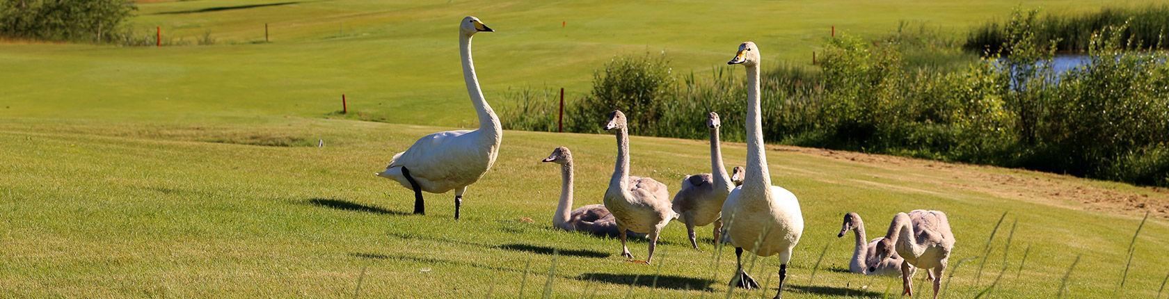 Aulanko Golf GEO environmental certification